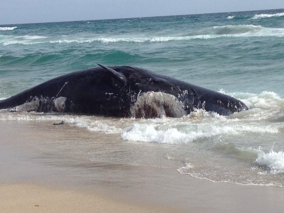 dead whale boca raton