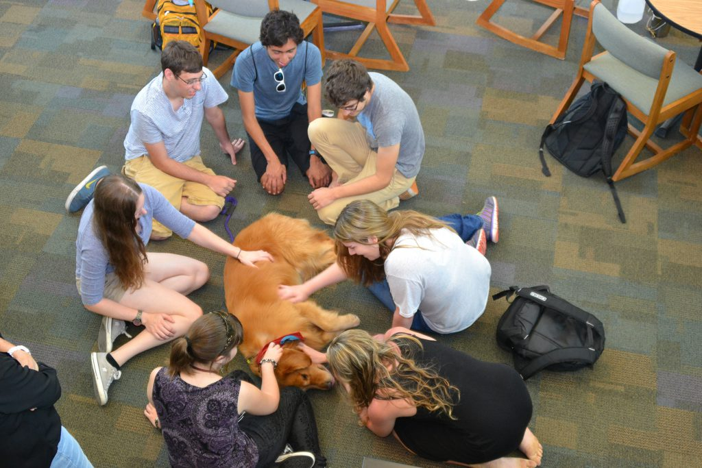Kol, a certified therapy dog, with Florida Atlantic University students during study break at the Wimberly Library. (Courtesy FAU).