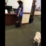 dog in library on spanish river in boca raton