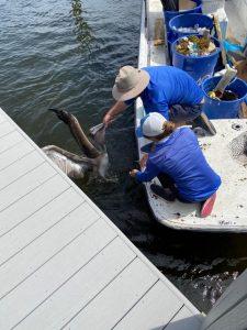 freed pelican boca raton