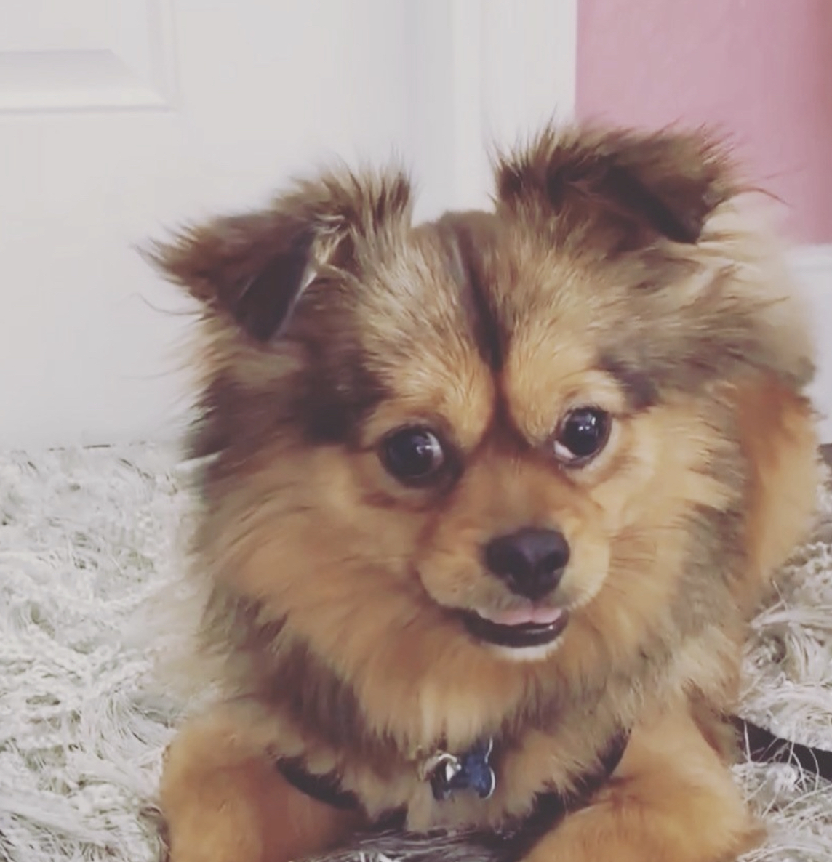 Chance dog stolen